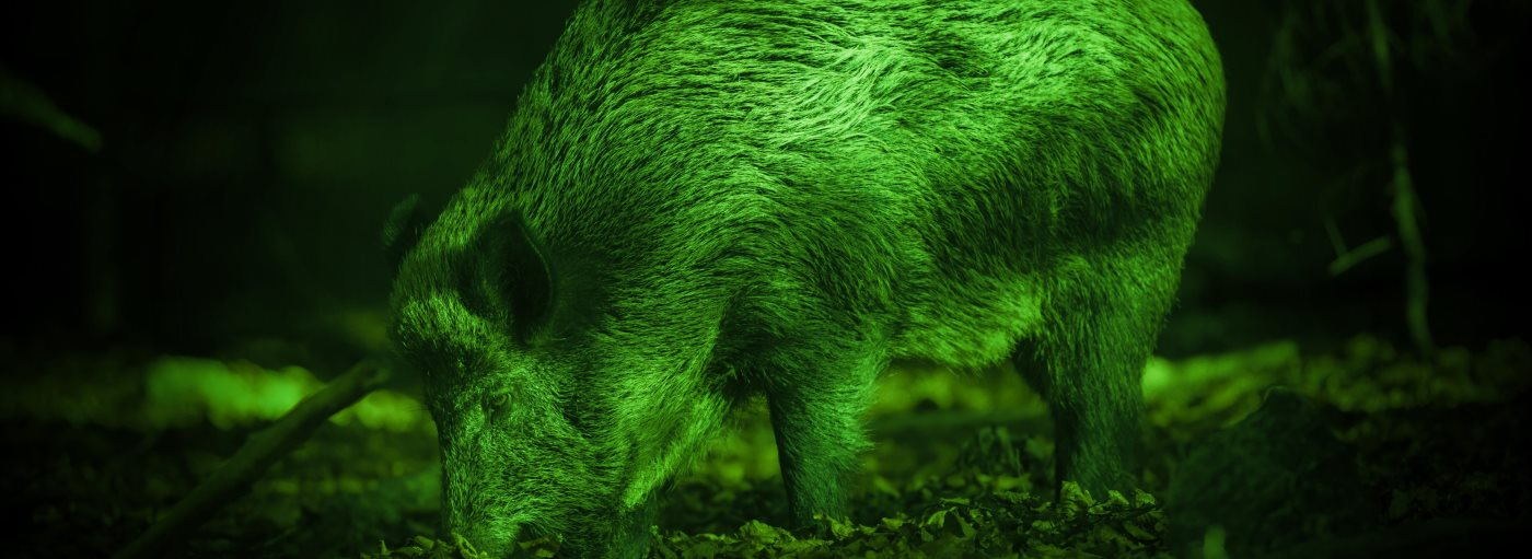 green-led-and-hog-e1541534233810